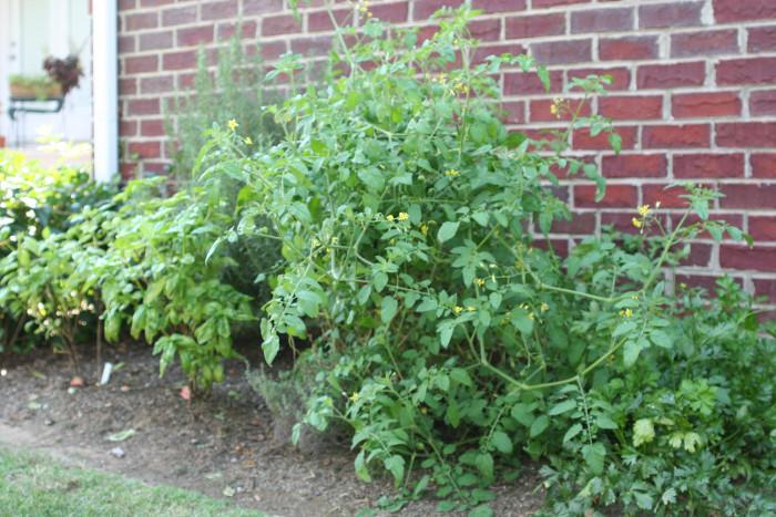 herb-garden0001