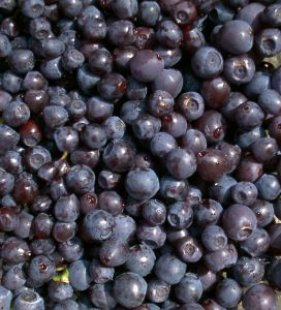 Storing-In-Season-Blueberries