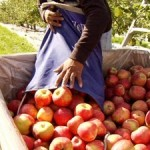 Apple Butter Recipe and Gift Ideas