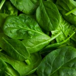 Spinach Recipe Exchange