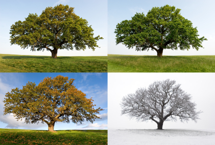 four seasons change management In fact, all of nature cycles through seasons of change and transformation,  you  felt like you had very little control over your circumstances, and you began to.