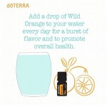 Wild Orange: How I Am Using It Today