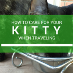 How to Care for your Kitty When Traveling + Our Kitty Story