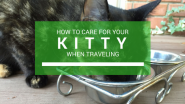 how to care for your kitty