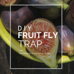Get Rid of Fruit Flies — Easy DIY Fly Trap