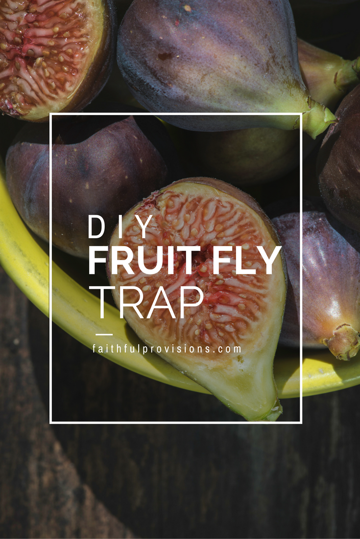 get rid of fruit flies easy diy fly trap faithful provisions. Black Bedroom Furniture Sets. Home Design Ideas